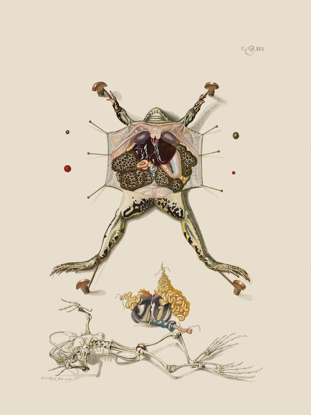 a study of the history of frogs There is no specific name for the study of frogs and toads thestudy of all amfibians and reptiles is called herpetology.