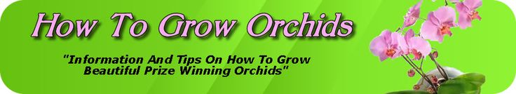 When Oncidiums are potted in a basket there should be a great deal of crock and not much compost. Sphagnum may be added to the orchid soil or medium. The genus requires a lot of water and consequently adequate drainage