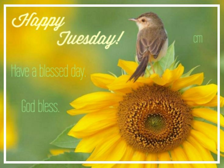 Good Morning! Happy Tuesday! Have a blessed day. #goodmorning #goodmorningpost #good #bird #morningpost #morning #happytuesday #happy #tuesdaymorning #tuesday #gm #tuesdaymemes #gmw #tuesdays #tea #coffee #workgrind #day #morninggrind #grind #riseandshine #blessings #am #post #posts #meme #memes #memesdaily #blessing #blessed