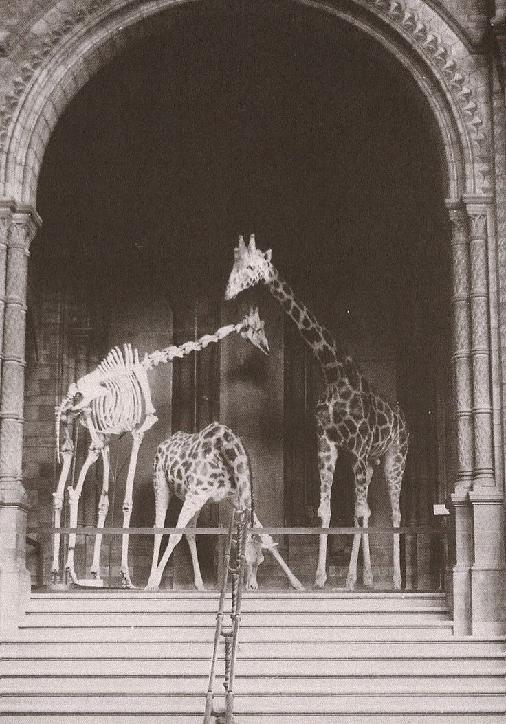 Natural History Museum, London. 1903