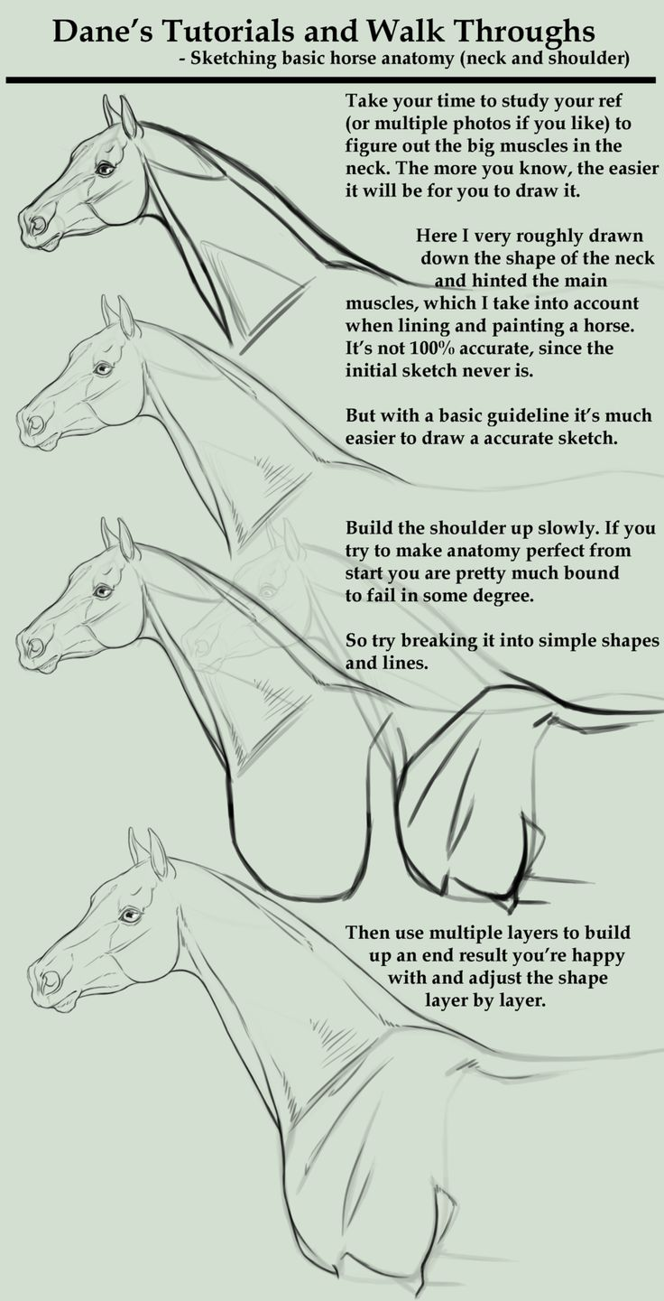 How to draw a horse. Tutorial/Walk Through - sketching a horse neck etc by AgerskovArt.deviantart.com on @deviantART