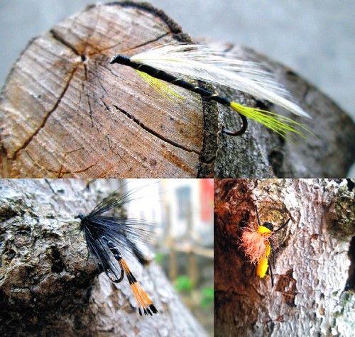 insetti - La nostra di oggi http://www.ehabitat.it/2014/04/03/un-pesce-fuor-dacqua-e-un-pugno-di-mosche/