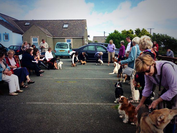 Dog show in Trefin www.trefin.info