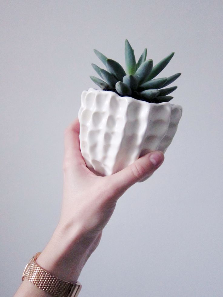 Succulent in handmade ceramic pinch pot planter