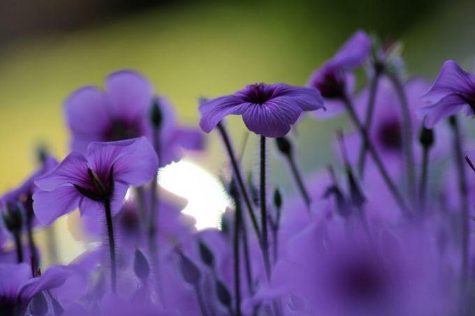Купить фотообои Фиолетовые цветы на заказ в Украине!