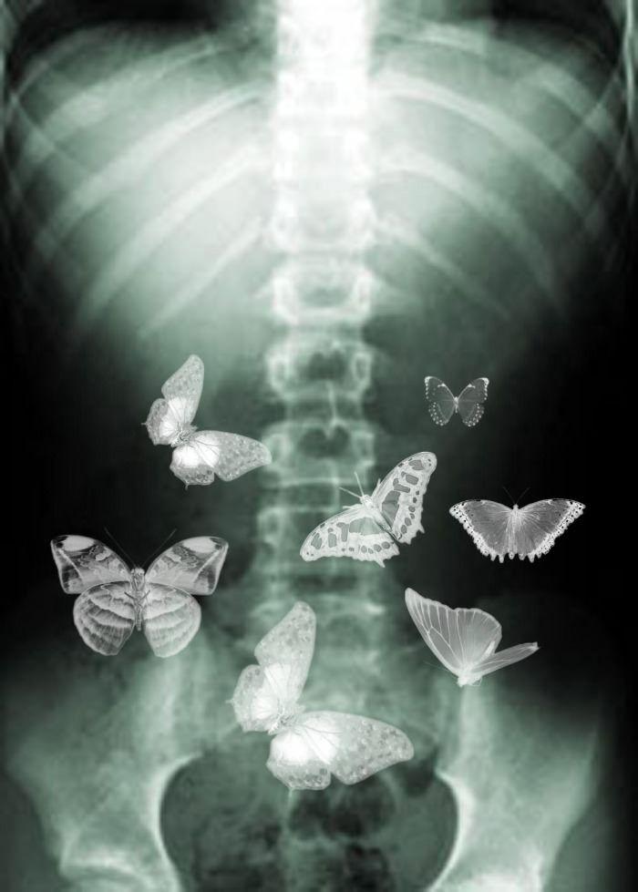 Картинки бабочки внутри