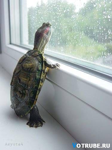 Yo sé cuidar por mis mascotas. Cuando yo estuvo, yo tengo muchos tortugas, conejos, peces, y perros. Yo alimento comer a mis mascotas y afecto para ellos. Desafortunadamente, ellos estan todo desaparecieron.