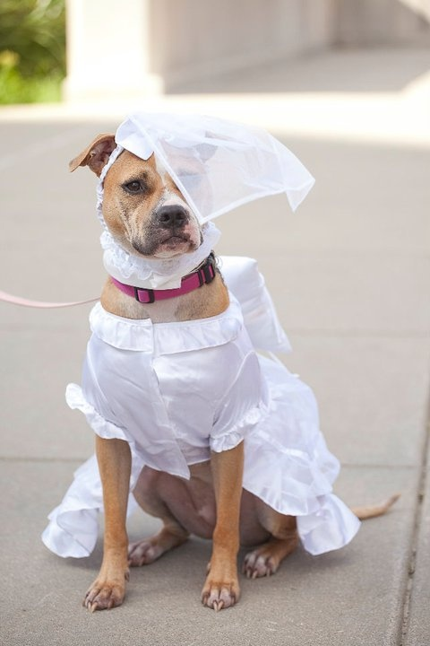 20 Best Images About Wedding Wuffs On Pinterest Dog Ring