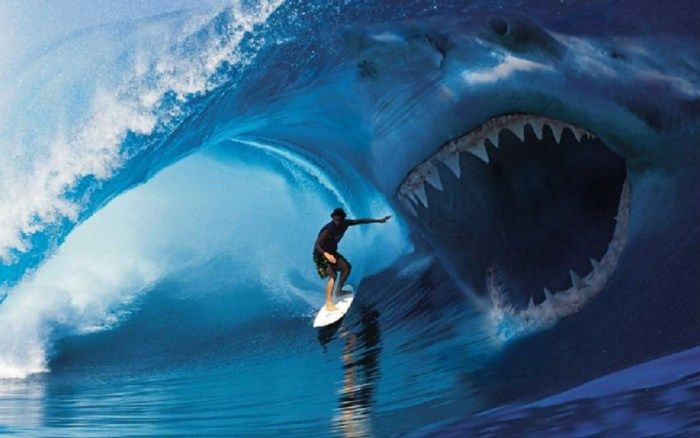 attacchi-squalo-mediterraneo