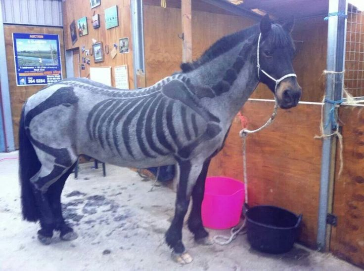 My horses would never let me do this, but this is so cool!! Halloween body clipped skeleton horse!