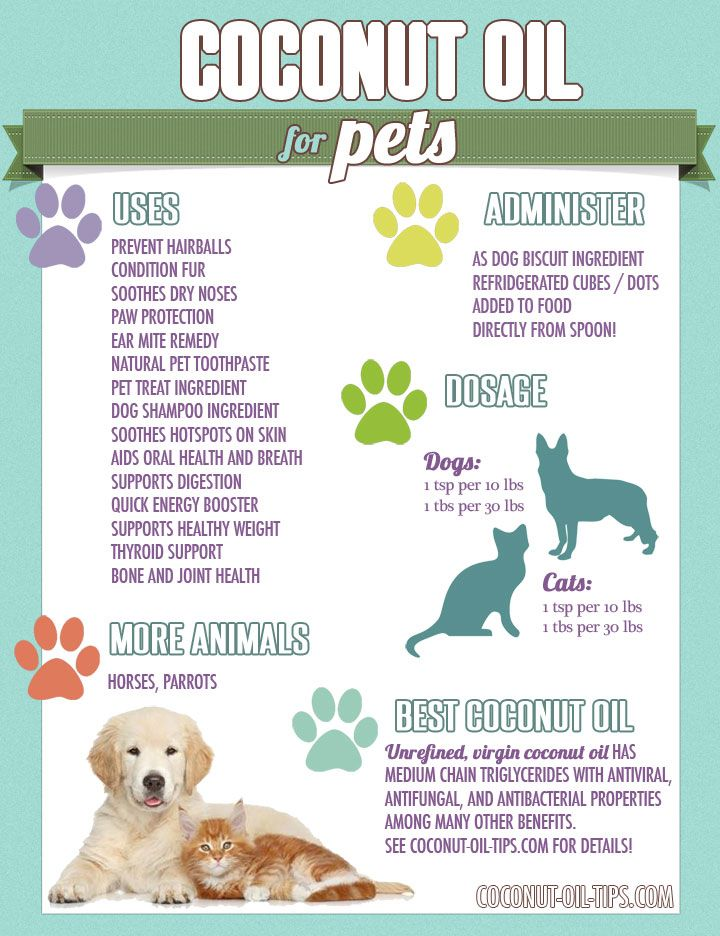 Coconut Oil for Pets: The Benefits and Uses of Coconut Oil for Cats, Dogs, Birds!