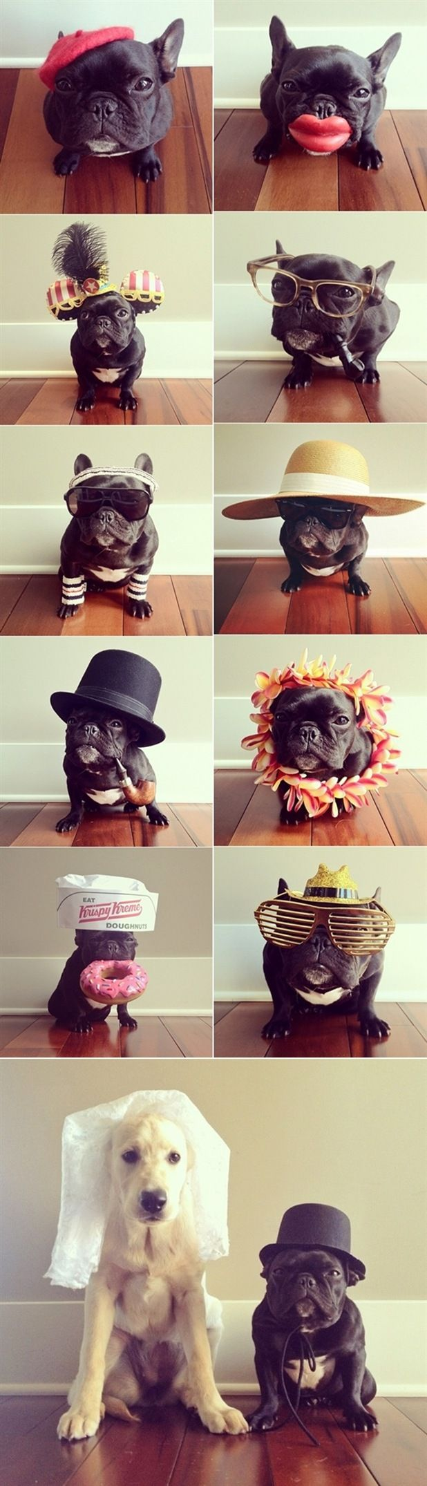 :) This makes me want a French bull dog so bad!