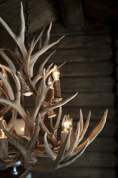 1000 Ideas About Deer Antler Chandelier On Pinterest