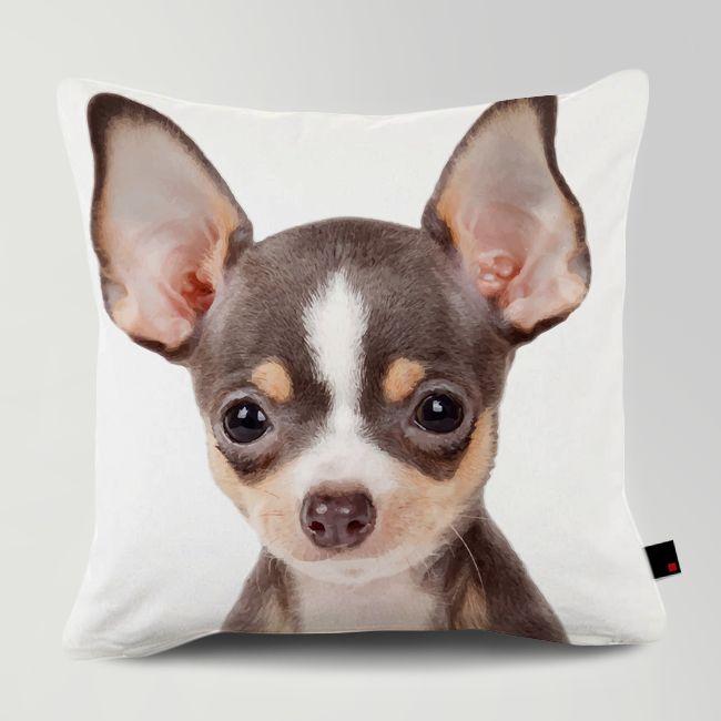 Customized Chihuahua Cushion  주문제작 치와와 쿠션 #홈데코 #데코 #쿠션 #강아지 #애견쿠션 #치와와 #chihuahua www.OneRevolt.com