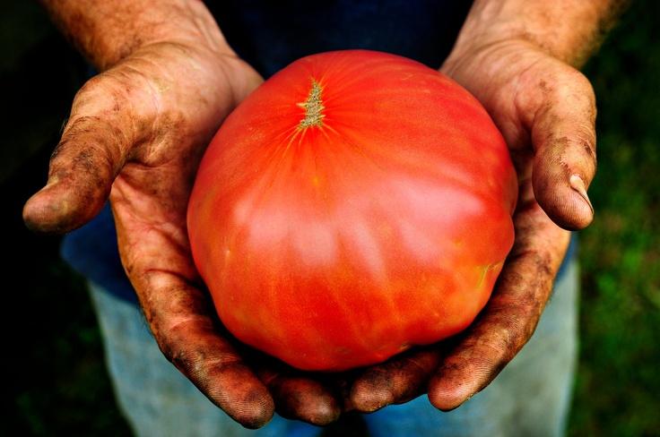 You're Invited: Heirloom Tomato Fest 2012: Beats, Bowls Green, Local Food, Farmers Marketing, Acr Farms, Sea Salts, Blog, Heirloom Tomatoes, Community Farmers