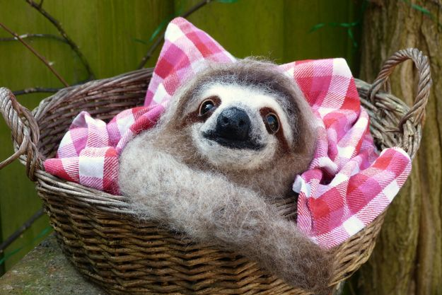 This sloth is going on a picnic.
