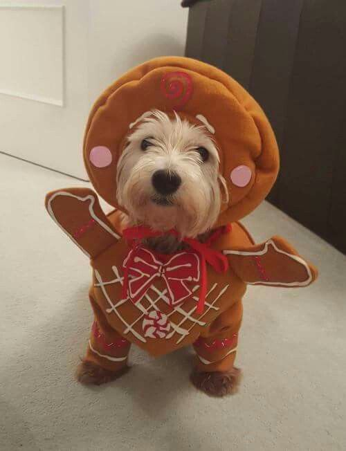 25+ best Dog costumes ideas on Pinterest | Dog halloween costumes ...