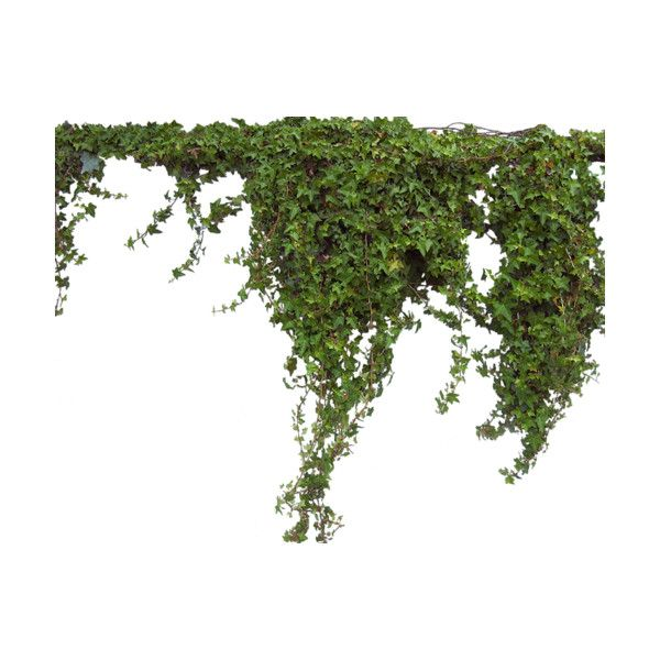 Liked on polyvore featuring greenery flowers for Good filler plants for landscaping