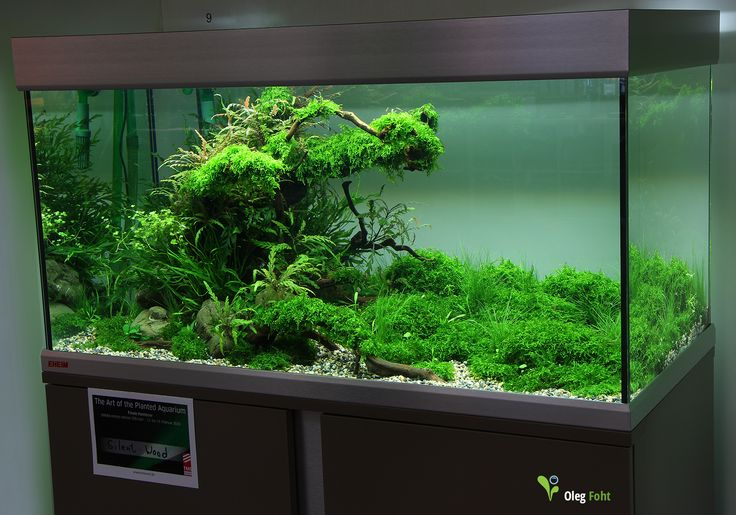 the art of the planted aquarium 2015 4 place. Black Bedroom Furniture Sets. Home Design Ideas