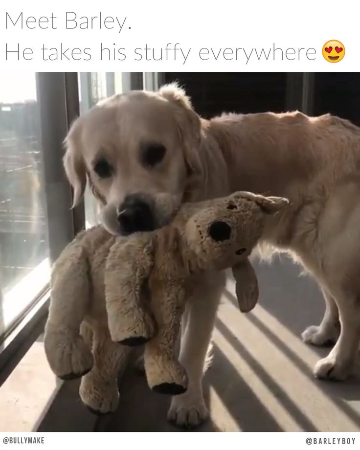 Golden Retriever Has Best Friend