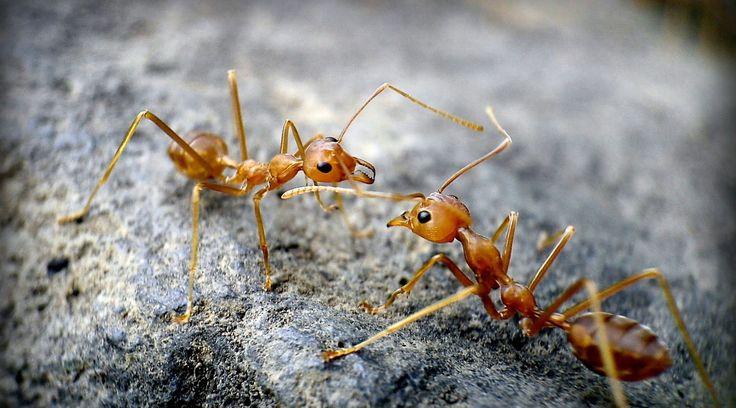 Cara Alami Mengusir Semut Dari Dalam Rumah