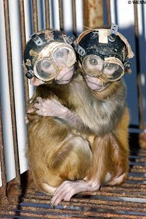 animal testing - gut wrenching, there has to be a better way...support companies that don't test on animals