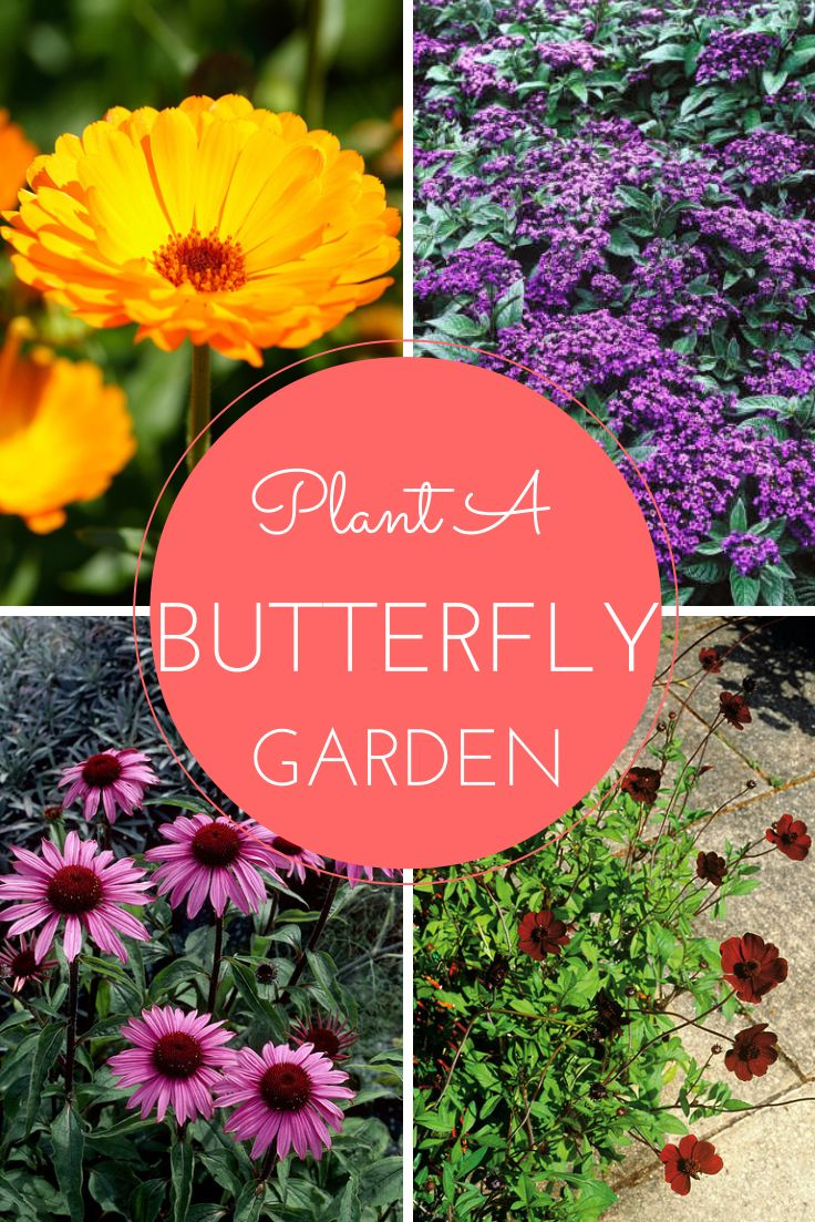 20 Flowers For a Butterfly Garden --> http://www.hgtvgardens.com/photos/flowering-plants-photos/butterfly-garden-flowers?soc=pinterest