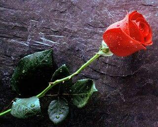 Cintamu bagaikan air hujan yang jatuh di hatiku.