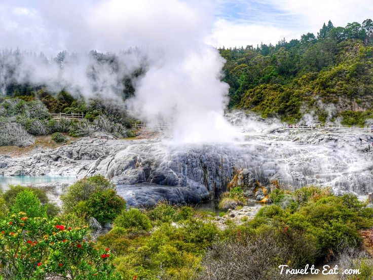 Geyser Flat with Steam. Whakarewarewa Thermal Valley. Te Puia, Rotorura, New Zealand
