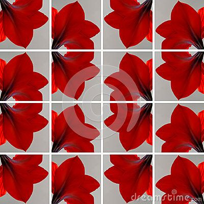 Decorative #background made of #gray #square shapes filled with one #red #Amaryllis #flower