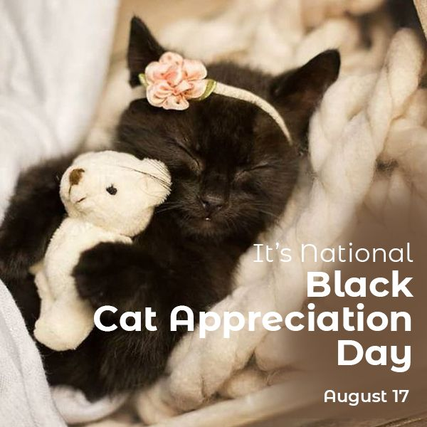 Happy National Black Cat Appreciation Day In 2020 Black Cat Appreciation Day Cat Care Cats