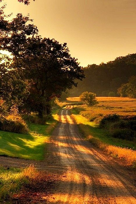 Dirt road, country road, trees, landscape, beauty of Nature, peaceful, photo