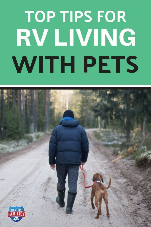 Top Tips For Rv Living With Pets Pets Rv Living Full Time Rv