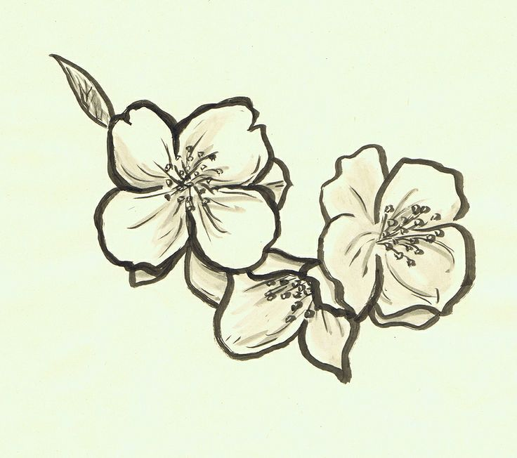Vintage Flower Drawing Jasmin Ecosia