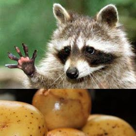 5 easy steps to rid those raccoon eyes. Use potato to remove dark rings under the eye.