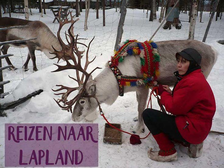 Reizen naar Lapland is een aanrader! De natuur, de koude, tochten op sneeuwscooters én het Noorderlicht zijn een bezoek meer dan waard.
