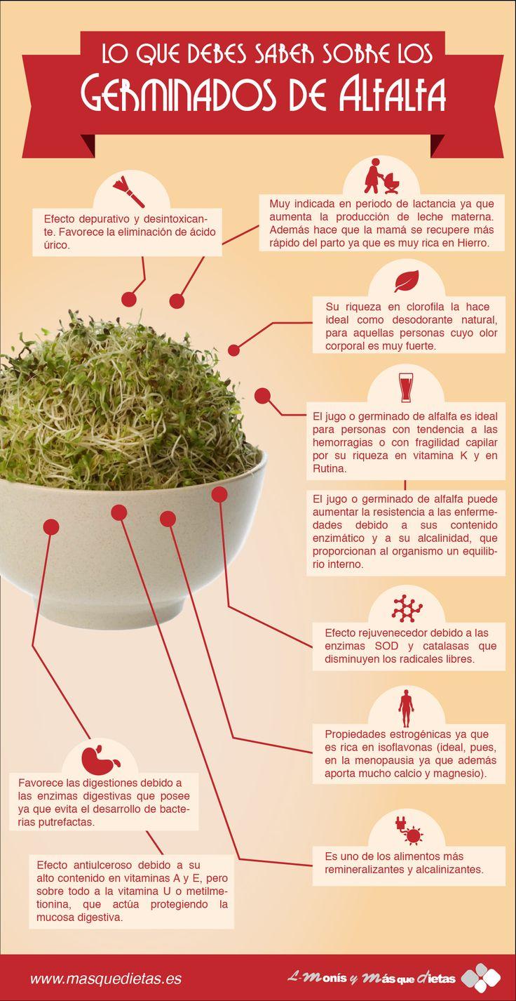 #Infografia sobre los Germinados de Alfalfa #Salud #Nutricion