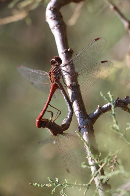 Of Dragonflies |Discovering Kos and the surrounding islands