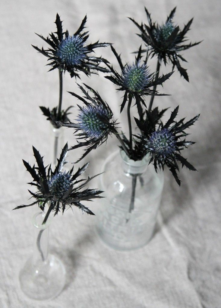 These spooky blooms are perfect for a Halloween centerpiece.