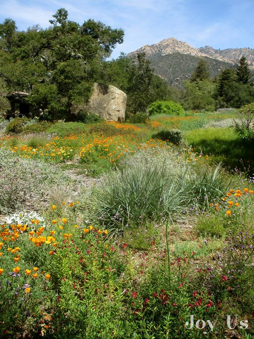 California Native Plant Week at The Santa Barbara Botanic Garden