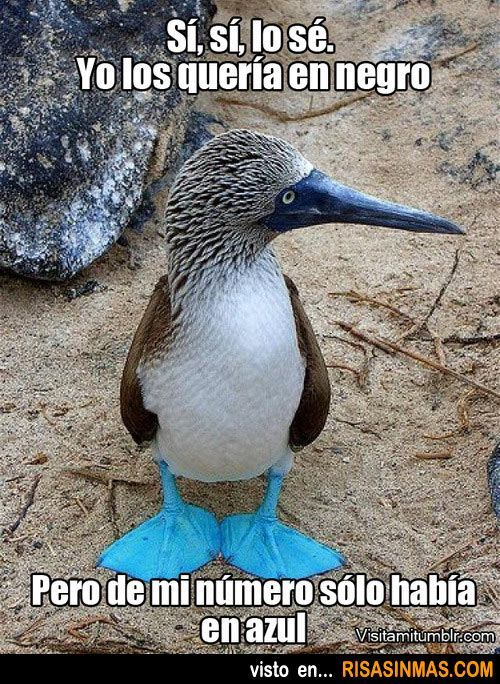 A little animal humor with imperfect narration and object pronouns. Bonus: the blue-footed booby's (alcatraz patiazul, piquero de patas azules o alcatraz camanay) habitat is pretty much limited to Spanish-speaking countries!