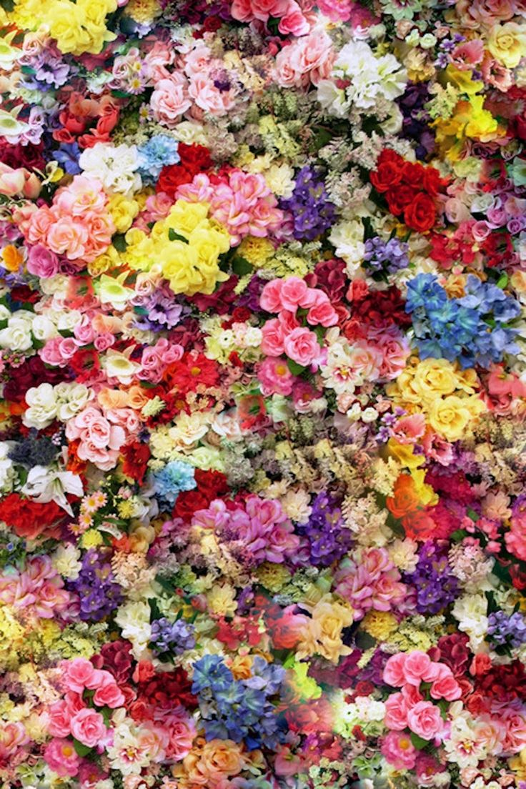 Best Flowers Mixed Colours Images On Pinterest Colours - Colorful flower garden background