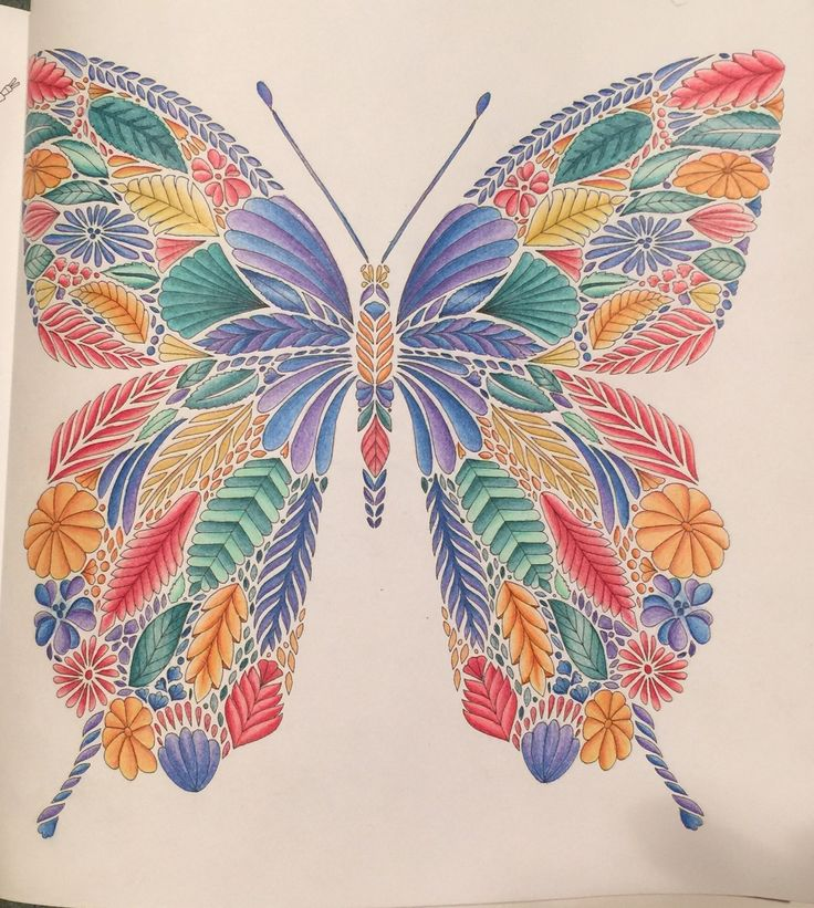 Tropical World Coloring Book Butterfly