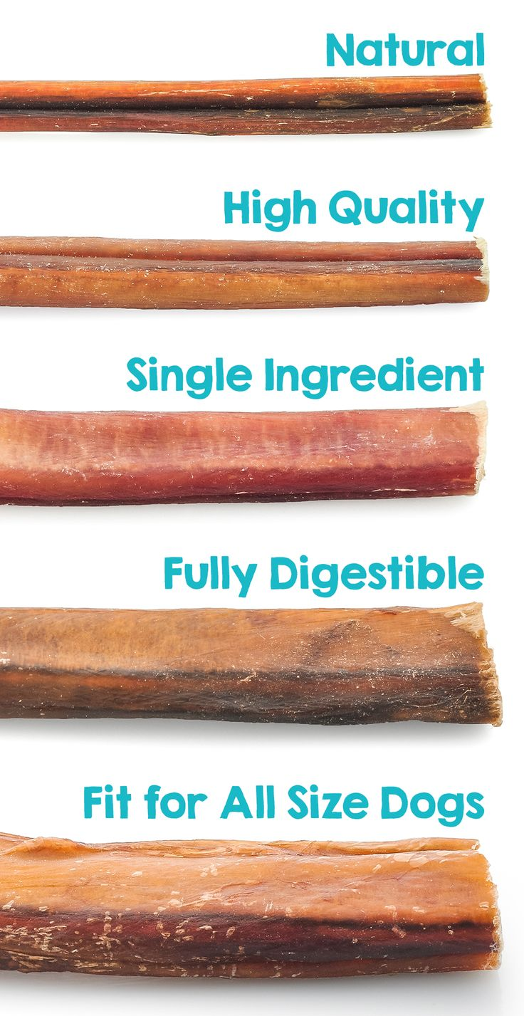 are bully sticks right for your dog learn more about this natural dental dog chew to consider. Black Bedroom Furniture Sets. Home Design Ideas
