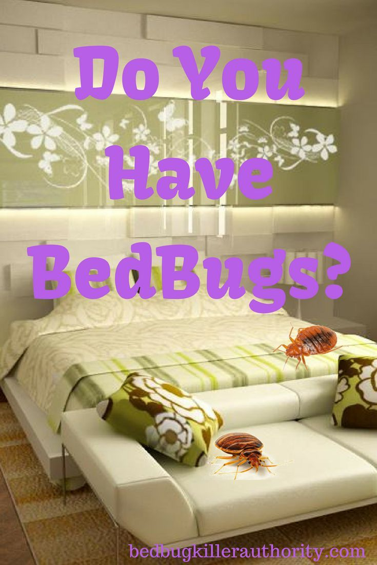 Snap shots procedure in addition to protection bed bug