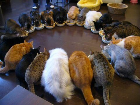 21 cats having lunch.