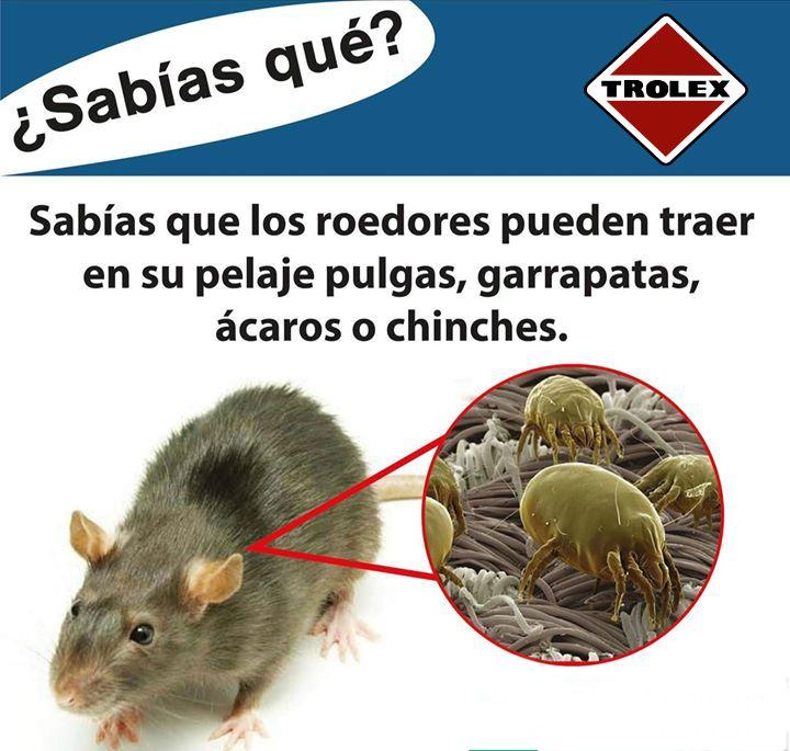 Imagen De Trolex En Infographics Trolex Garrapatas Roedores Pulgas