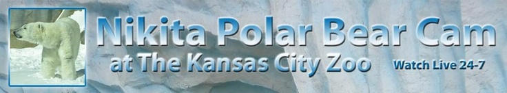 Nikita Polar Bear Cam | Kansas City Zoo - KCTV5