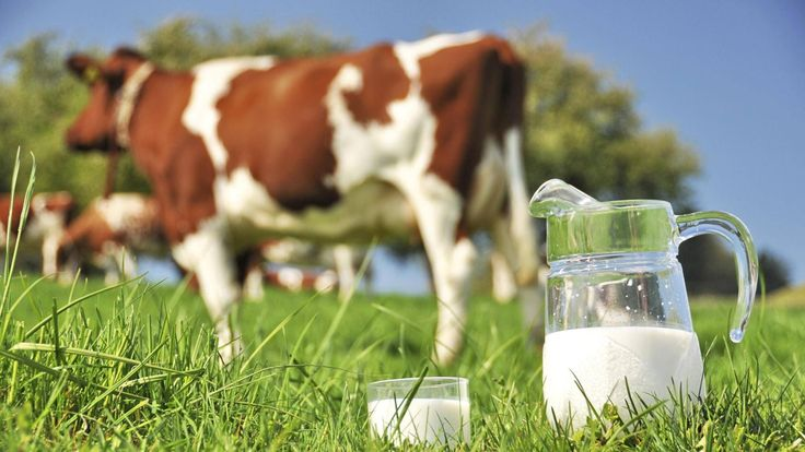 Первое полугодие 2017 года ознаменовалось для сельхозпредприятий увеличением производства молока, которое по сравнению с предыдущим годом выросло на 3,1%. Причиной этому является увеличение надоя молока на корову. При этом в сентябре 2017 года произошло повышение цен на сливочное масло, что объясняется ошибкой трейдеров. Ведь Российский рынок масла сбалансирован за счет снижения потребления, увеличения собственного производства и большего импорта в I полугодии 2017 г.
