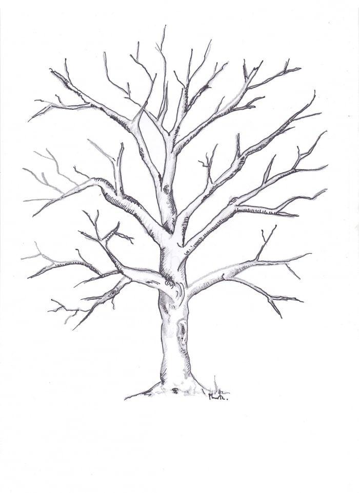 Картинки разукрашки деревья зимой
